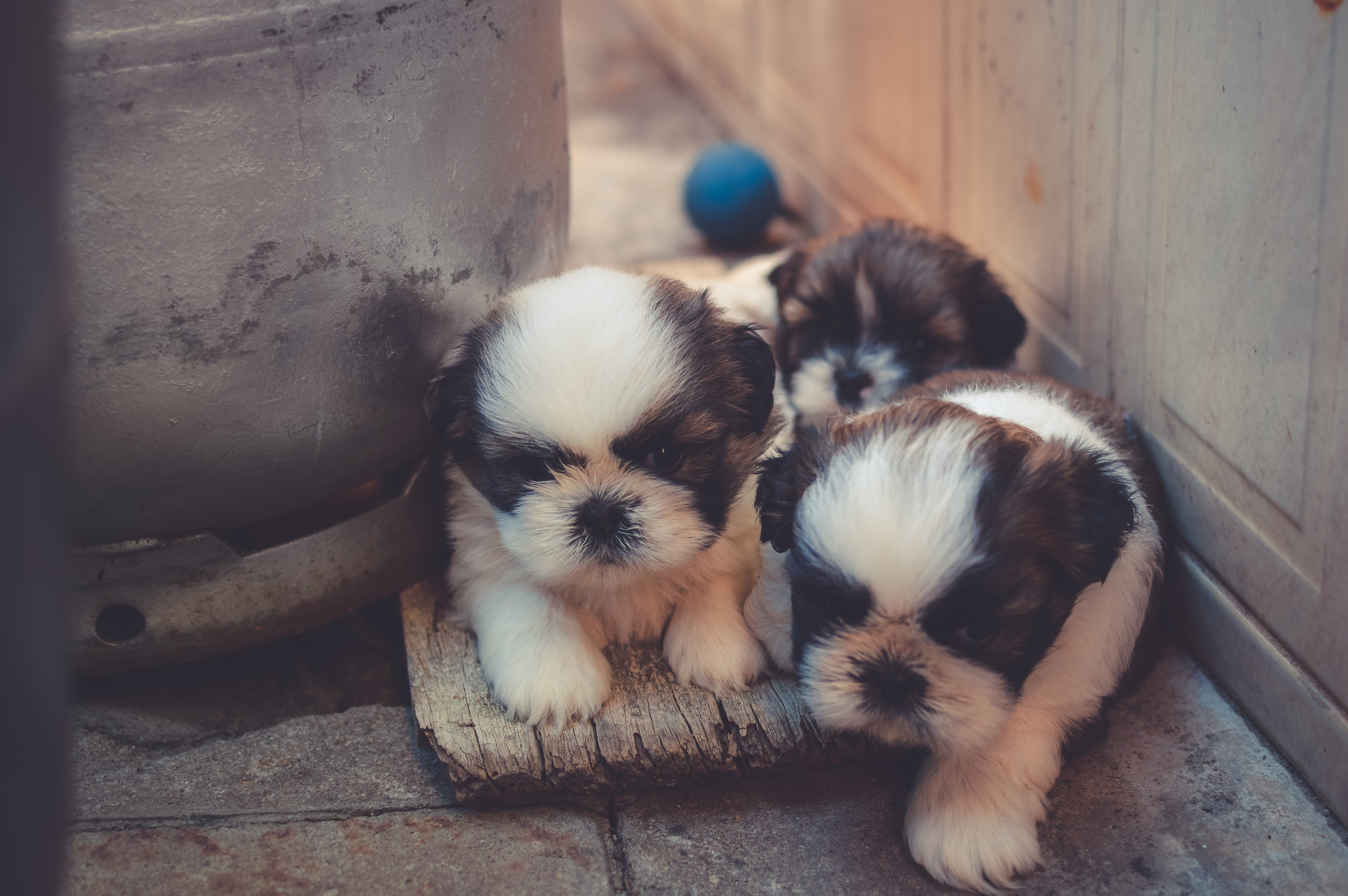 4 Reasons Why You Should Choose Small Dog Breeds