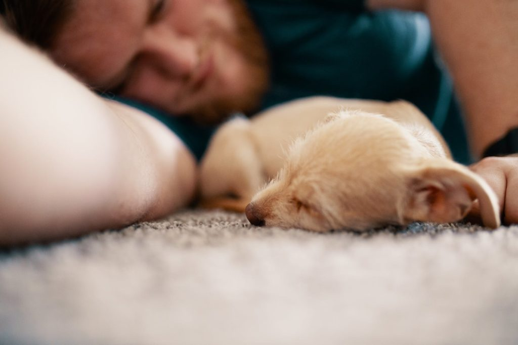 Puppies in Love: Capturing Hearts