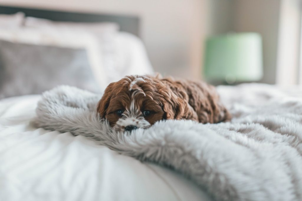 Cute Aggression Response: An Overwhelming Reaction Towards Pets