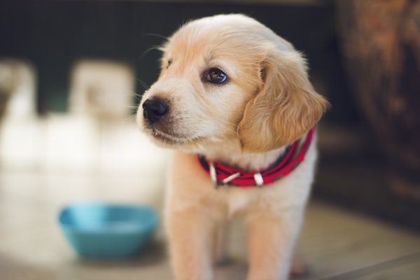 Things You Should Know About Puppy Training