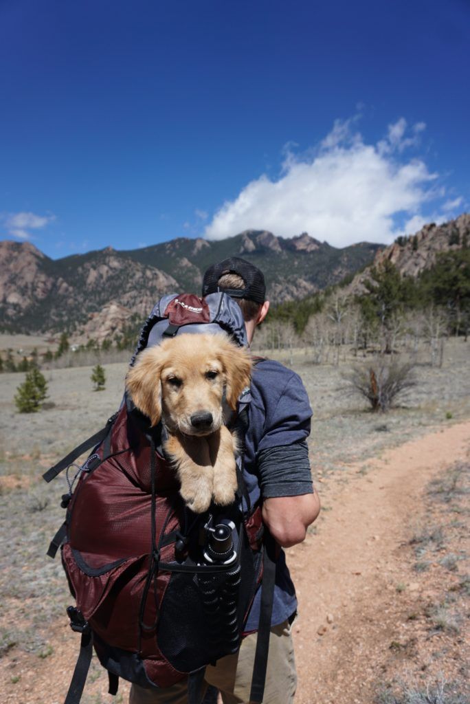 Backpack For A Dog For Travelling.