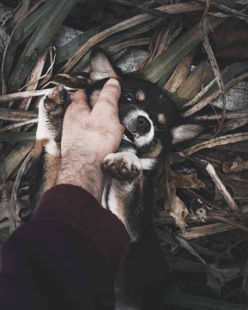 Learn How To Get A Puppy To Stop Biting
