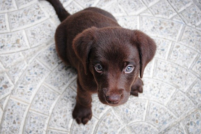 Puppy Vaccines: Which Shots Does My Puppy Need And When?